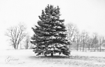 Tree_Snow_B_W_Large_.jpg