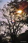 Vert_Sun.jpg