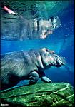 Zoo_042fd.jpg