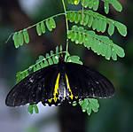 butterfly7.jpg