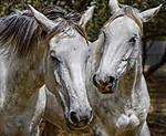 horses2small.jpg