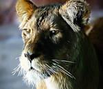 lion-frac.jpg