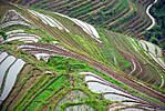 riceterrace.jpg