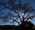 tree_halo_re-crop.JPG