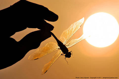 A dragonfly and the sun
