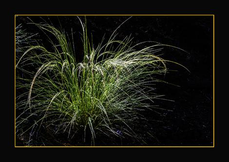 Just Wild Grass