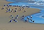 web-P1010714-gulls_NR_USM-2.jpg