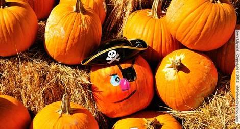 Well-dressed pumpkins