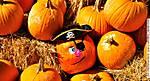 0f_R_134_D90-2_VR18-II_Iso250_19Oct12_Pensa_Pumpkin_sgc699.jpg