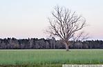 3_D_207_D7000_VR18-ii_I-640_15Mar13_SR-4_S-Rosa_Farm-field_Tree_sgc699.jpg