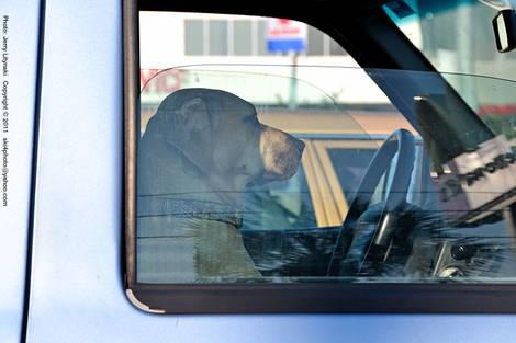 A *no-texting* driver....