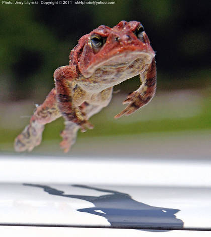 Leap Toad vs Leap Frog