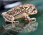 000_044_G_D60_VR55-200_Iso200_Ptx_T-95_29Jun10_Toad_Glass_ugc692.jpg