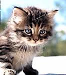 001_D_103c_D700_70-Sig_Iso1000_7Feb09_Kitten_sgc690.jpg