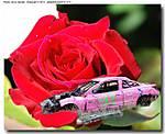 00_v00_F_308_D80_90-Tam_Iso160_Tpod_8Jun10_Rose_Val_sgc688.jpg