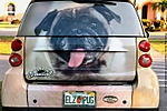 2_Y_277_D5200_VR18-140_I-250_26Feb14_Trip_SW-Fla_Dog_Car_sgc699.jpg