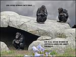 chimps6.jpg
