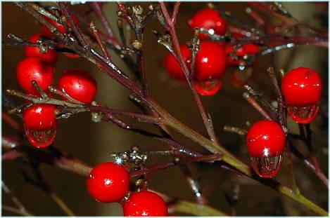 Cranberry Rain