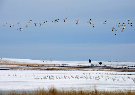 Freezeout Lake Bird Migration