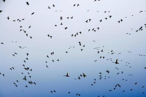 Freezeout Lake Bird Migration