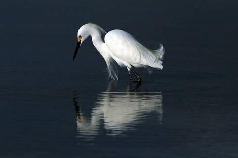 Marco Island Reflections