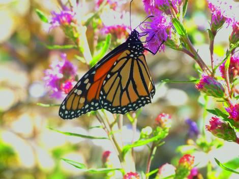 Flutter Flutter 1