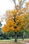 001_C_068_D40x_VR18-200_Iso400_3Dec09_Brookley_Tree_1_sgc699.jpg