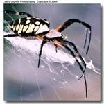 02_M_17-c_F5_200_SB28_Su200_7Aug05_Spider_ugc500.jpg