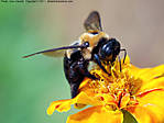 22_F_015_D60_AF55-200_Iso400_Ptx-T95_6Aug11_CView_Bee_sgc691.jpg
