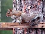 23488003_R_082-c_D50_500_Tpod_Iso800_22Feb06_Squirrel_uc506.JPG