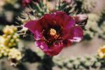 245810cactusflower12.jpg