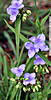 4_I_134_D5000_VR18_I-250_10Dec12_Pensa_Yard_Purple-Flwrs_sgc699.jpg