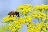 Busy_Bee1.jpg
