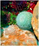 Cacti_garden.jpg