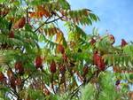 Fall_Trees.jpg