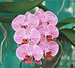 IMG_4701-Orchard_flower.jpg