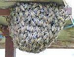 P1020485-Bees.jpg