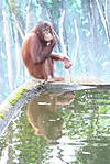 P1080589-monkey_reflection.jpg