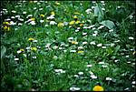 THE_FLOWER_b.jpg