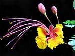 Tropical_Flower.jpg