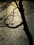 Under-the-Tree---.jpg