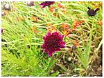 Wildflower1.jpg
