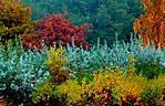 Wojciech_Zielinski_colors_of_autumn_DPP_3136.JPG