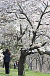 spring-inspired.jpg