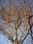 tree-sunset.jpg