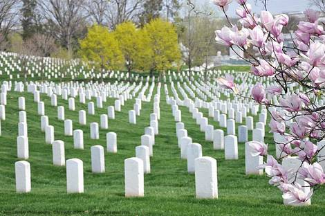 One view in Arlington National Cemetery