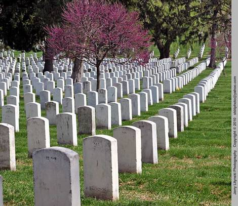 A section of Arlington National Cemetery