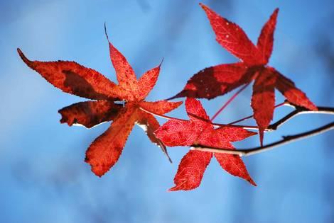 Last Of Leaves
