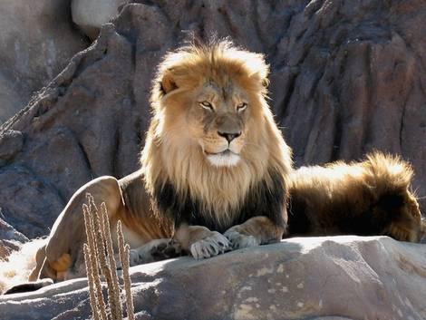 Lion 2x tele