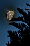 1_Half_moon.jpg